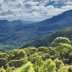 Biodiversity offsets as a tangible currency in NSW