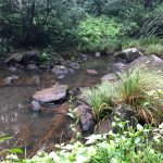 archaeology coffs harbour