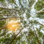 biodiversity-conservation-act