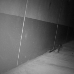 Niche ecologists record photographic evidence of Spotted-tailed Quoll using road underpass